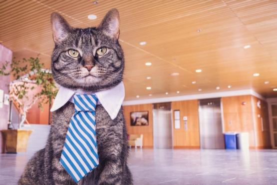 Unimpressed cat photo by Ryan McGuire